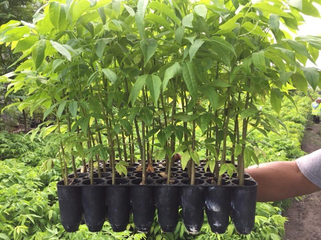 arboles forestales
