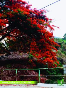 arboles de belleza escenica