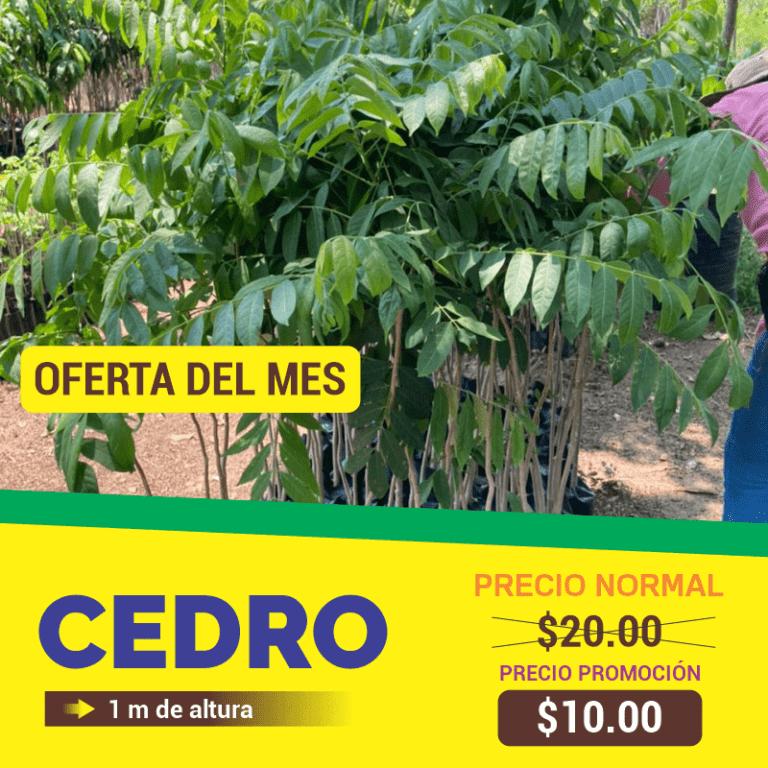 Naturum Vivero - Arboles Forestales